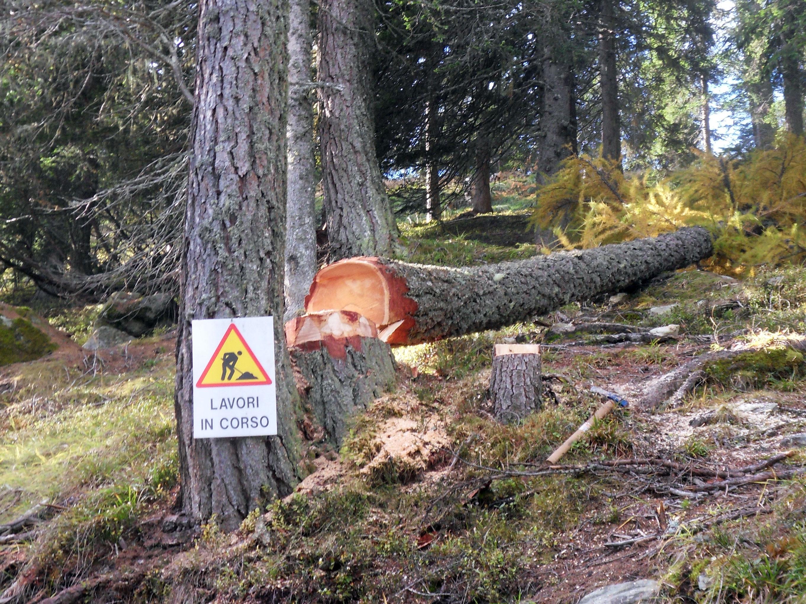 lavori in corso taglio bosco